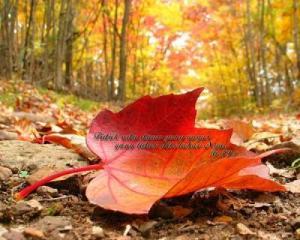 Allah maha tau walaupun daun yang gugur